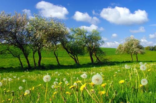 arbre-du-pays-de-caux-en-normandie.jpg